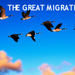 The Great Migration Is Underway This Week!